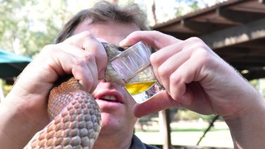 Chewie cracks the world venom record for a king brown, his handler at the Australian Reptile Park, Billy Collett, says.