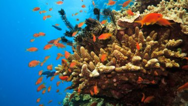 The Great Barrier Reef is home to more than 1500 species of tropical fish.