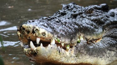 A saltwater crocodile has been blamed for the woman's disappearance.