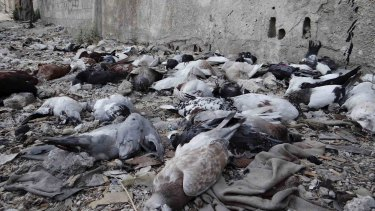 Pigeons lie on the ground after dying from what activists said was the use of chemical weapons by forces loyal to President Bashar Al-Assad in Damascus in 2013.