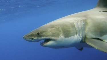 The founder of a South African shark spotter program will visit WA to inspects its coastlines and meet with stakeholders.