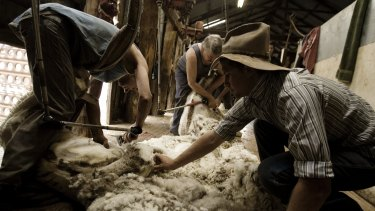Shearers work on a fleece two decades after the end of the floor price.