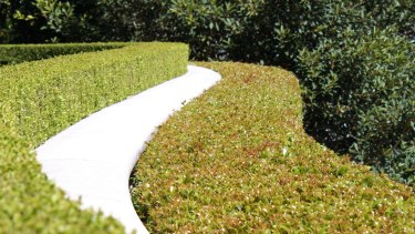 Outdoors Create The Perfect Garden Hedge It S A Snip