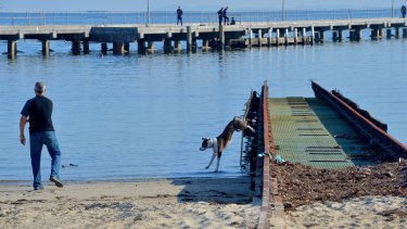 A dog walker at Royal Brighton Yacht Club's unusable boat ramp. It was identified in a club report as a future risk to the public using the beach.