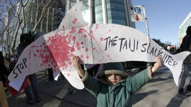 A child protests the Taiji hunt.