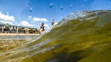 EPA has warned of poor water quality in Port Phillip Bay.