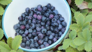 Blueberries are also selling cheaply.