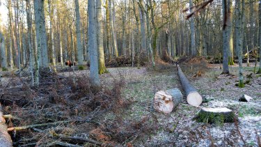 With ClientEarth's groundwork, the EU has instructed Poland to stop logging Europe's last primeval forest, the Bialowieza Forest.