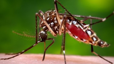 There were a record number of Ross River virus notifications in 2015.