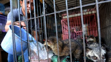 Civet cats can be bought in Bali for $45 each.