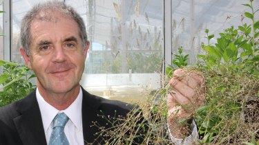 University of Queensland Institute for Molecular Bioscience Professor David Craik is working on growing drugs in plants.