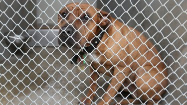 In 2013/14, 17 per cent of dogs and 63 per cent of cats were euthanised, with a high number of cats unsuitable for rehoming.