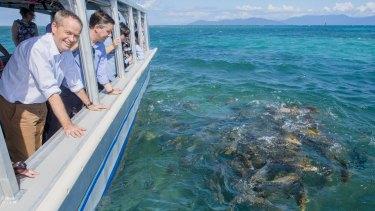 Labor leader Bill Shorten on a visit to Green Island, off Cairns.