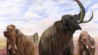 Mammoths lived in late Paleolithic period, which stretched from about 200,000 BC to 10,000 BC.
