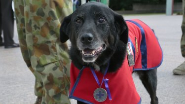 Sarbi, Australia's most decorated military dog, has died.