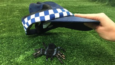Two Mareeba police officers were flagged down by French backpackers near Granite Creek and asked to help remove a spider from the backpackers' campervan.