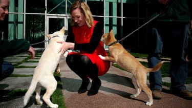 Greens senator Larissa Waters meets a dingo pup for Threatened Species Day at Parliament House.