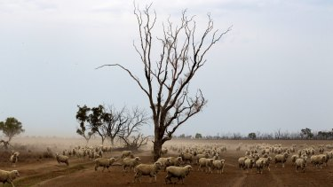 While shepherds watched: NSW gets hotter and hotter.