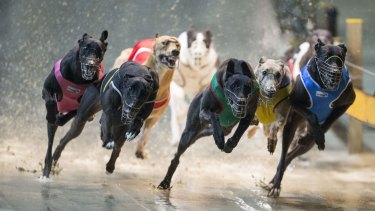 The NSW government plans to ban greyhound racing from July next year.