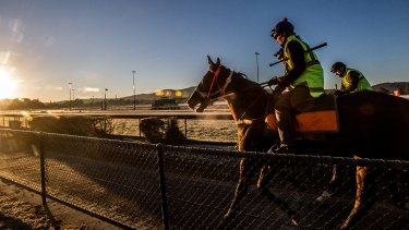Canberra trainers have been banned from the Highway Handicap.