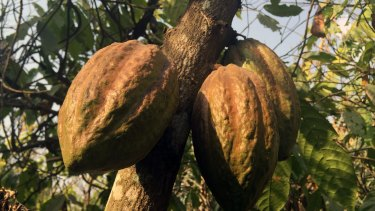 Nestle said it was striving for better conditions for workers by using cooperatives for its cocoa supply chains in West Africa's Ivory Coast but that generally businesses had low awareness of slavery in supply chains.