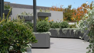 Ronene Cauchi and Ean Rodrigues's wall and floor planter from ABC'S Dream Gardens.