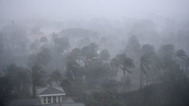 Palm trees blow in the wind as Hurricane Irma passes through Naples, Florida.