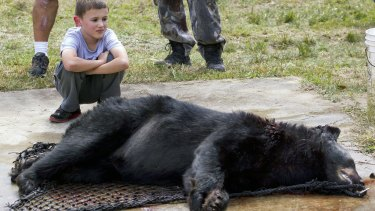 Aiden Everetts kneels next to a black bear that his father James Everetts killed in Marion County, Florida, on Saturday.