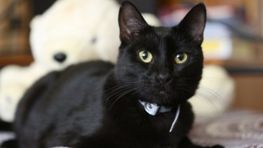 Saviour the cat was rescued from a freezer at the Wagga Wagga council animal shelter by volunteer Belinda Oakman.