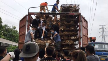 More than 100 Chinese activists rescue dogs and cats from a truck headed to slaughterhouses in Guangzhou.