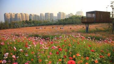 Surrounded by high-rises, Kongjian Yu's ornamental park and farmland draws residents in Quzhou.