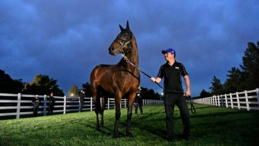The best: Winx is so strong it seems other trainers are unwilling to nominate for races she is running in.