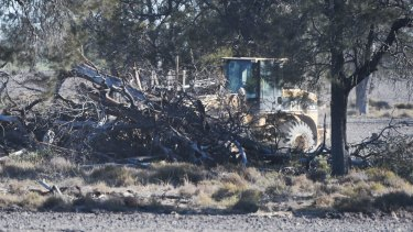 Removing trees along the Newell Highway in the state's far north.