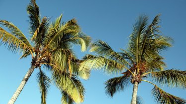 A woman died in Cairns Hospital after a palm tree fell on her.