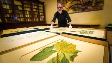 Des Cowley with some of the prints made from the original copper plates produced after Captain Cook's Endeavour returned from the Pacific.