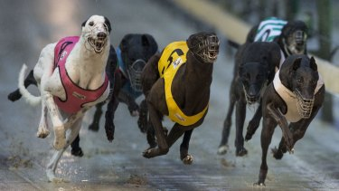 An inquiry is being held into the greyhound racing industry.