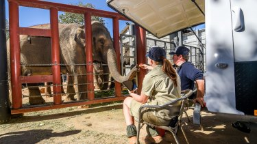 Elephant keepers have been waiting for Num-Oi to give birth for a while.