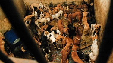 Dogs waiting to be slaughtered at an abattoir in East Jakarta, Indonesia, in 2010.