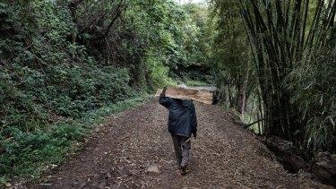 A local carries wood at Kilima, Papua New Guinea.