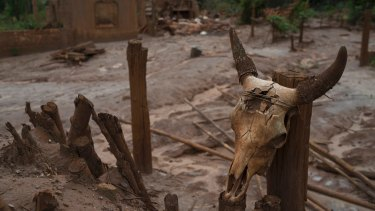 The aftermath of a mudslide caused by the Samarco dam failure.