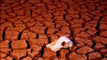 Australian start-ups have long faced a funding drought.