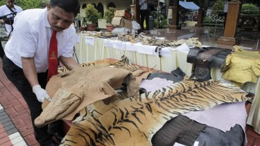 Officials display evidence of crime in the form of tiger skins and other rare animals last week.