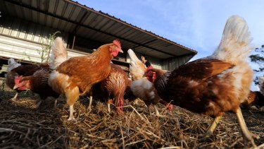 The Greens say free-range eggs should live up to their name.