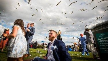 The seagulls descend.