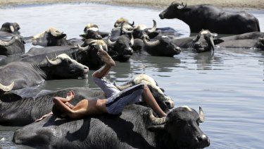 A child rests on the back of a water buffalo in the Diyala River in Baghdad, during a July heatwave that struck Iraq.