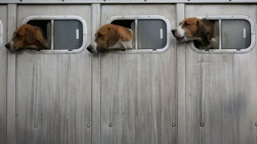 Small Melbourne apartments are referred to as ''dog boxes''.