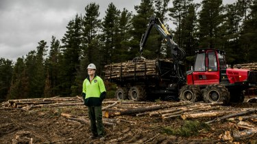 More than 300 hectares of dead pine trees at Kowen Forest are being chopped down. Forestry Assistant of Parks and Conservation Service ACT Bryan Geoghegan surveys the damage.