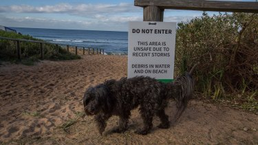 Collaroy Beach was kept closed and under guard after storm damage in June 2016.
