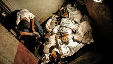 Dogs are transported in sacks with their mouths tied shut.