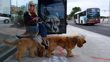 Anne Robinson wants the freedom to travel on public transport with her cocker spaniels Molly (left) and Daisy (right).